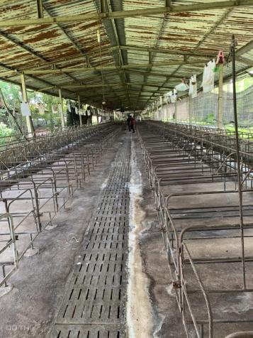 Bán trang trại 1,2ha xã Xuân Sơn, Châu Đức, Bà Rịa Vũng Tàu, giá 5 tỷ 12962106