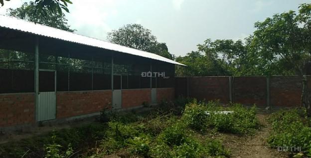Bán trang trại vườn gần sông xã Tân Thành, huyện Bình Tân, Vĩnh Long 12979985