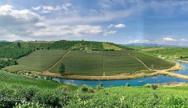 Bán đất nghỉ dưỡng Bảo Lộc cạnh khu du lịch Đồi Chè Tâm Châu giá siêu rẻ 13574731