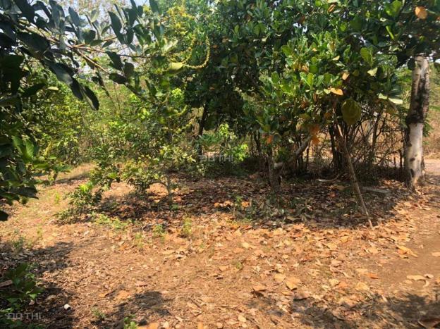 Bán miếng vườn trồng cây ăn quả 1039m2 giá 350tr 13673687