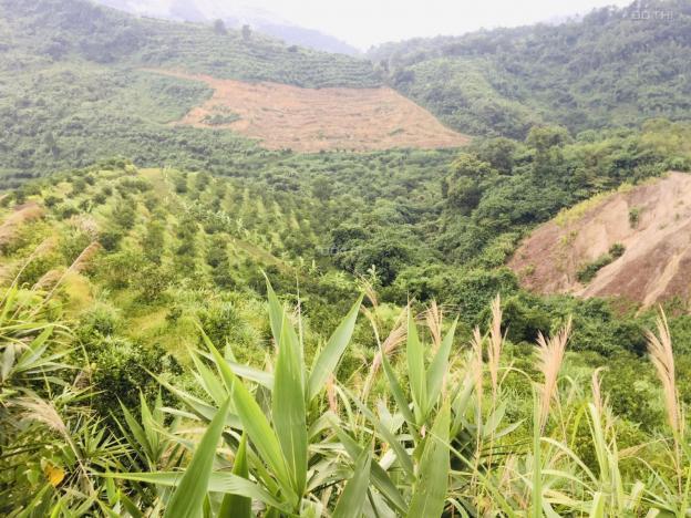 Cần chuyển nhượng 10.89ha đất rừng sản xuất rẻ đẹp tại Cao Phong, Hòa Bình 13735656